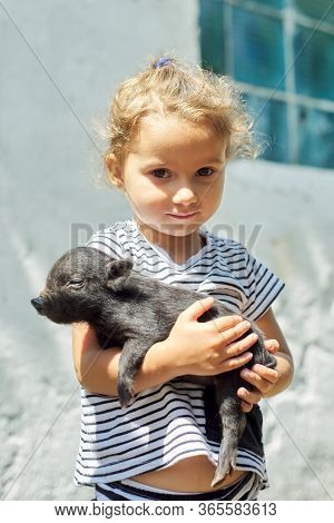 Girl Child Toddler Holding In Hands Of Black Newborn Baby Piglet. Farm, Agriculture, Country, Pets,