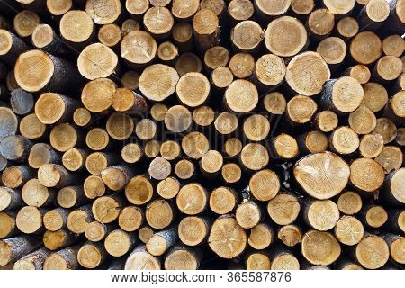 Wood Stack Timber Woodpile Trunk Side View Circle Pattern Forest Industry