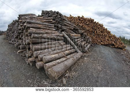 Timber Wood Stack Yard Forestry Industry Woodpile Log Wide Angle