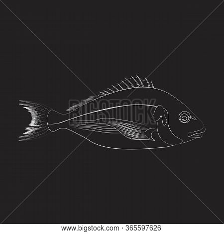 Dorado Fish Illustration Outline On The Black Background. Vector Illustration