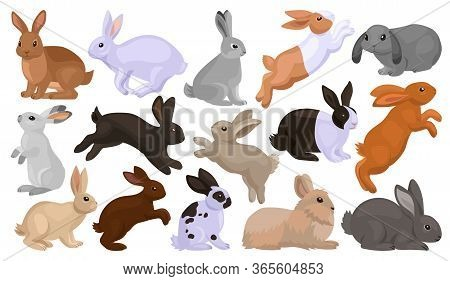 Rabbit Vector Cartoon Set Icon. Isolated Cartoon Set Icon Animal.vector Illustration Rabbit On White