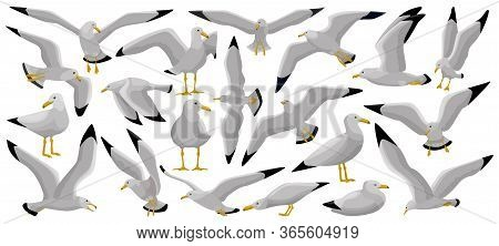 Bird Gull Vector Cartoon Set Icon. Vector Illustration Seagull On White Background. Isolated Cartoon