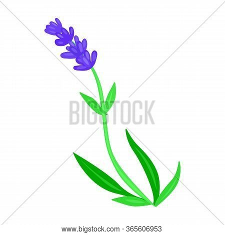 Lavender Vector Icon.cartoon Vector Icon Isolated On White Background Lavender.