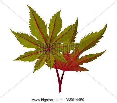 Castor Plant Green Fibrous Palmate Leaves Vector Illustration