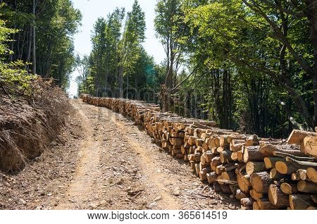 Forestry Industry. Log Stacks Along The Forest Road.