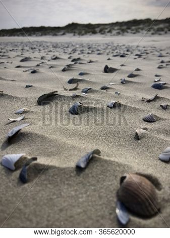 Seashells At The Beach In Germany, Makro