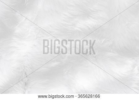 Closeup Animal White Wool Sheep Background In Top View Light Natural Detail, Grey Fluffy Seamless Co