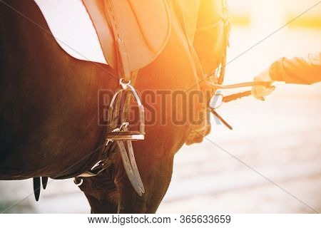 A Human Holds The Reins Of A Racehorse Bay Horse Dressed In Sports Equipment And Illuminated By Brig