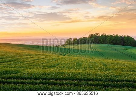 Wave Green Field With Trees And City Ceske Budejovice At Sunset. Czech Republic