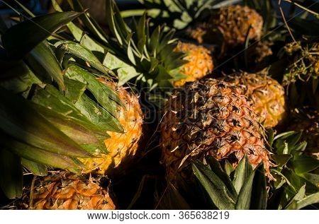 Pineapple background, close-up of whole ananas fruits at Zay Cho Market in Mandalay, Myanmar