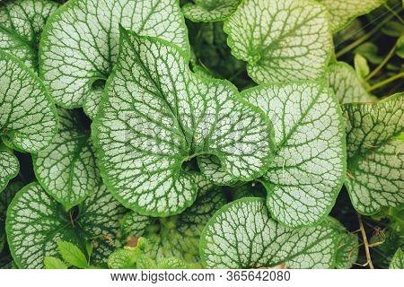 Carpet Of Mottled Green Leaves, Nature Background