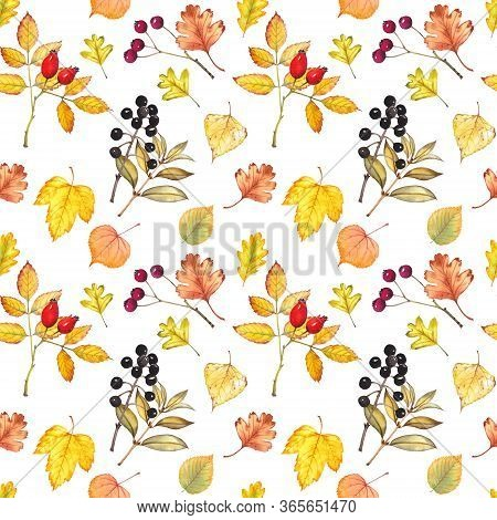 Seamless Pattern With Autumn Leaves And Berries. Rosehip, Hawthorn And Common Privet Plants. Waterco