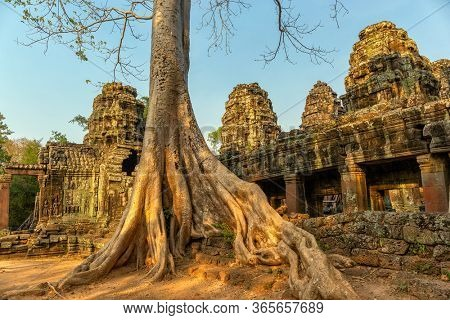 Roots of giant tree covering the ruin of Ta Prohm temple in Angkor Wat, Siem Reap, Cambodia