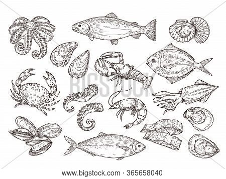Seafood Sketch. Vintage Fish, Drawing Food. Delicious Shrimp, Shell Squid. Sea Cuisine, Grilled Crab