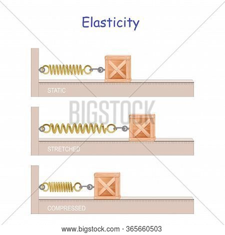 Elastic Potential Energy. Elasticity. Hooke's Law. Potential And Kinetic Energy. Energy Conversion