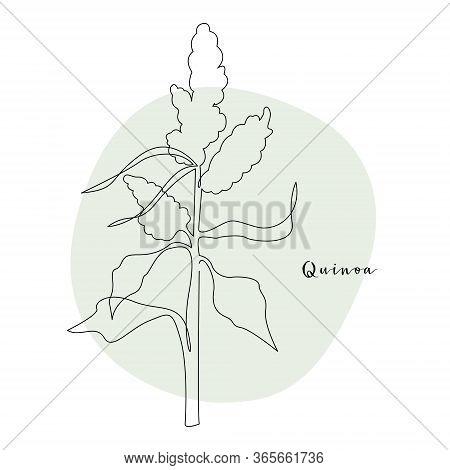 Continuous Line Quinoa, Grain Crop. Vector Line Art. Perfect For Logo, Packaging Design, Icon, Brand