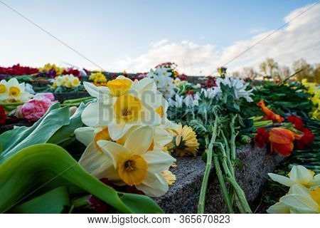Close Up View Of The Flowers Near Victory Park Monument In Riga, Latvia. Latvians Are Taking Part In