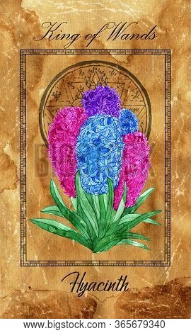 King Of Wands. Minor Arcana Tarot Card With Hyacinth And Magic Seal. Vintage Deck Enchanted Flowers.