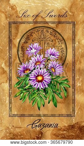 Six Of Swords. Minor Arcana Tarot Card With Gazania And Magic Seal. Vintage Deck Enchanted Flowers.