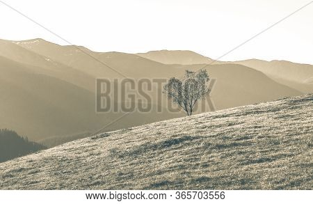 Aerial Mountain Landscape With A Single Tree Growing On A Grassy Slope Of Mountain, Beautiful Nature