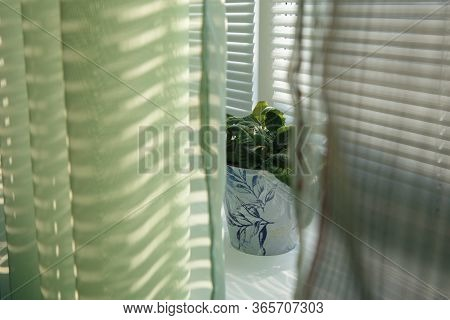 Between The Green Curtains, A Flower With Violets Is Visible. The Pot Is On The Windowsill. The Whol