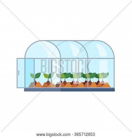 Vector Greenhouse With Different Plants Inside In Flat Style. Horticultural Conservatory For Growing