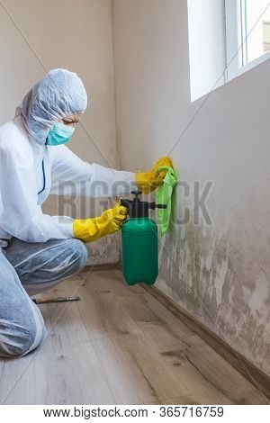 Worker Of Cleaning Service Removes The Mold Using Spray Bottle With Mold Removal Products.