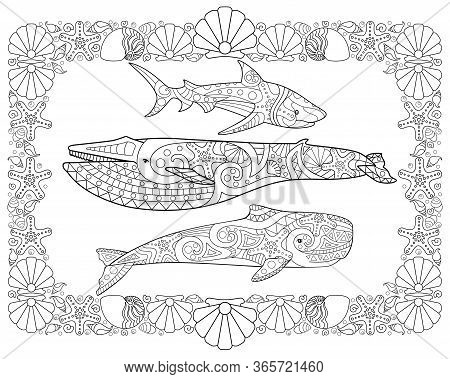 Sperm Whale, Blue Whale And Shark In A Frame From Shells - Horizontal Vector Page Coloring Antistres