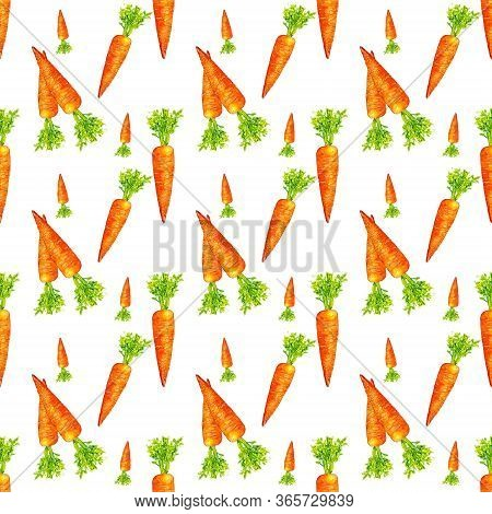 Seamless Pattern With Carrot Isolated On White Background. Watercolor Drawing Of Carrots On The Whit