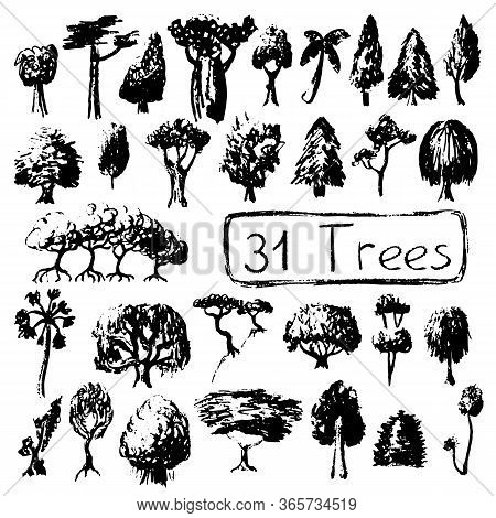 Black And White Set Silhouettes Of Tree. Summer Tree Vector Illustration On White Background. Black