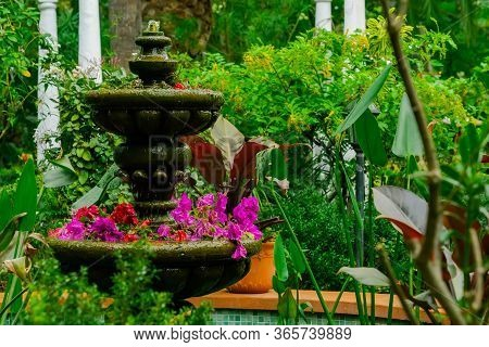 Tropical Green Garden With Fontain. Botany Garden With Various Plants And Flowers In Soft Focus. Exo