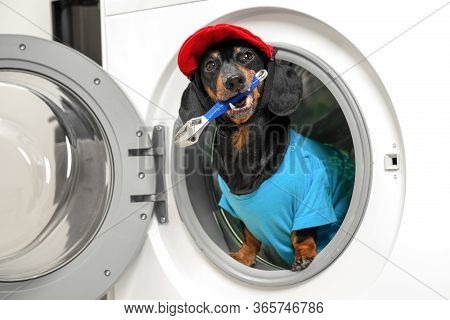 Portrait Of Obedient Dachshund Dog In Professional Plumber Costume With Wrench In Mouth Sits In Drum