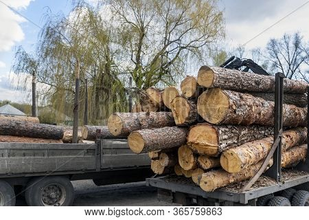 Loading Heavy Industrial Truck Trailer With Big Timber Pine, Spruce, Cedar Logs By Crane Grab Loader