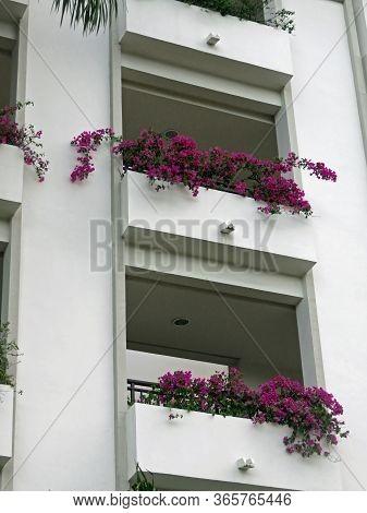 Beautiful Flowers In Window Boxes Of Luxury Resort