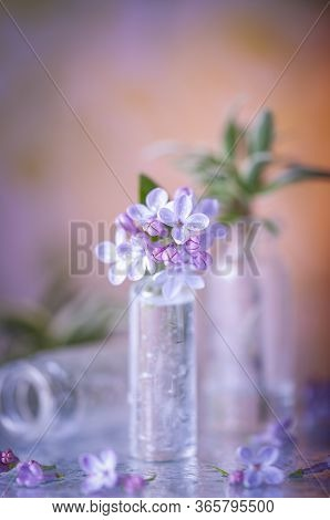 Lilac In A Small Jar. Micro Bunch. Still Life With Lilacs. Blooming Lilac