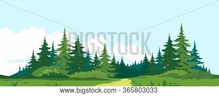 Path Through The Forest With Big Green Spruce Trees In Front View, Tourist Route Through The Dense S