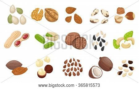 Nut Seed Set. Slices Nuts Pistachio Peanuts Brazilian Hazelnut Pumpkin Seeds Sunflower Flaxseed Almo