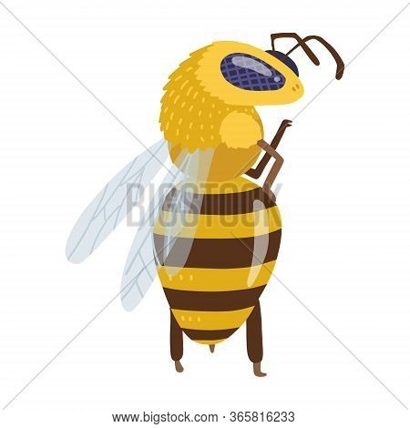 A Bee Or Honey Bumblebee Insect Character Insect Standing On Hind Legs In A Model Pose. Funny Vector