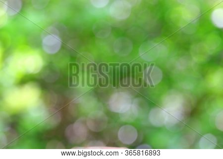 Defocused Green Autumn Leaves Background Theme,bokeh Green Nature, Subtle Background In Abstract Sty