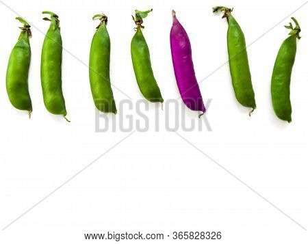 One Purple Pea Among Six Green Pods Lined Up In A Row, Isolated On White Background. Creative Natura