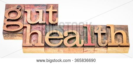 gut health - isolated word abstract in vintage letterpress wood type printing blocks, digestive health concept
