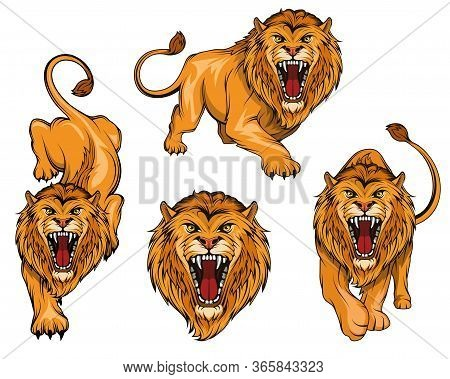 Lion Logo Set. Angry, Roar Lion. Predator Animal. Tameless Color Logo. Lion Stands In Different Pose