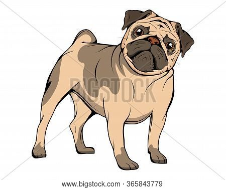 Adorable Pug Puppies. Humor Poster, T-shirt Composition, Hand Drawn Style Print. Cute Dog Of Pug Bre