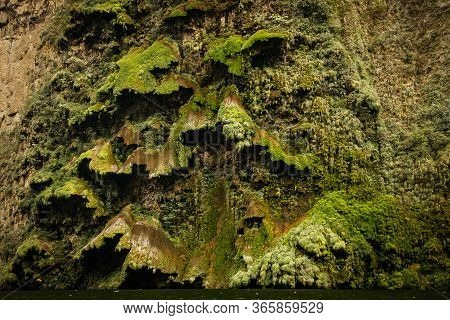 Big Green Moss In Sumidero Canyon As Sample Of Subtropical Mexican Vegetation