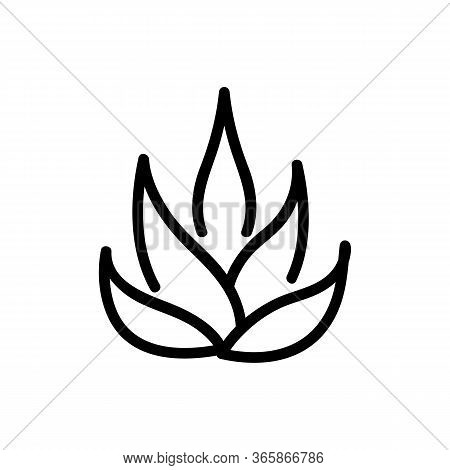 Agave Plant Icon Vector. Agave Plant Sign. Isolated Contour Symbol Illustration