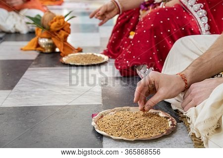 Hindu Bride And Groom Held Grain In Their Hands, Participating In The Wedding Ritual. Beautiful Trad