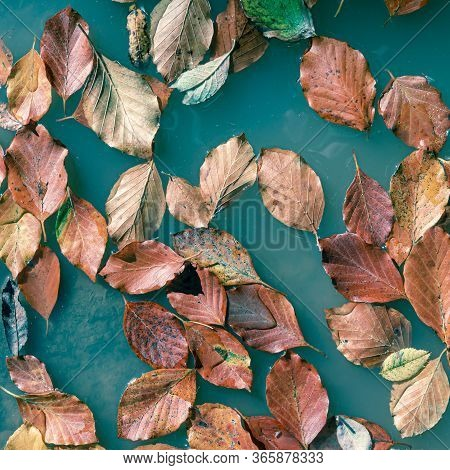 Orange Autumn Leaves Floating In Turquoise, Abstract Surreal Natural Autumn Background