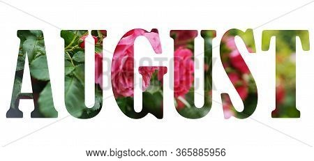Text August On White Background Over Pink Rose Flowers With Green Leaves