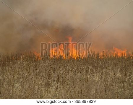 Fire. Conflagration. The Fire That Destroys Forest, Grass, And Agricultural Crops Burns In The Open.