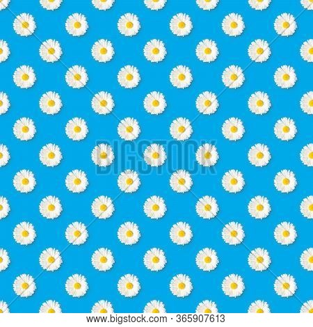 Pattern Of Chamomile Blossoms With White Petals And Yellow Pistils On Soft Blue Background With Copy